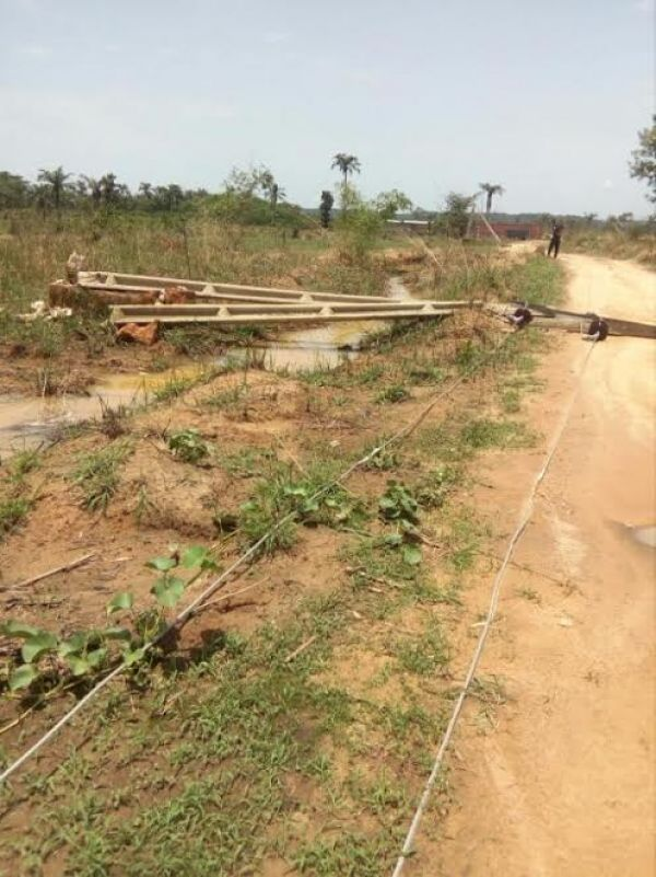 •EEDC electric poles blown down by heavy wind. Photo: Pamela Eboh.