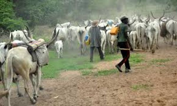 Herdsmen strike in Cross River; kill native