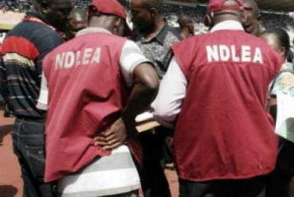 •NDLEA operatives.