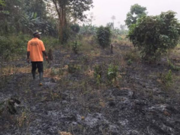 •Part of the farm burnt by herdsmen